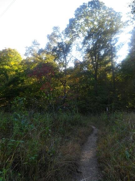 Sycamore Trail.