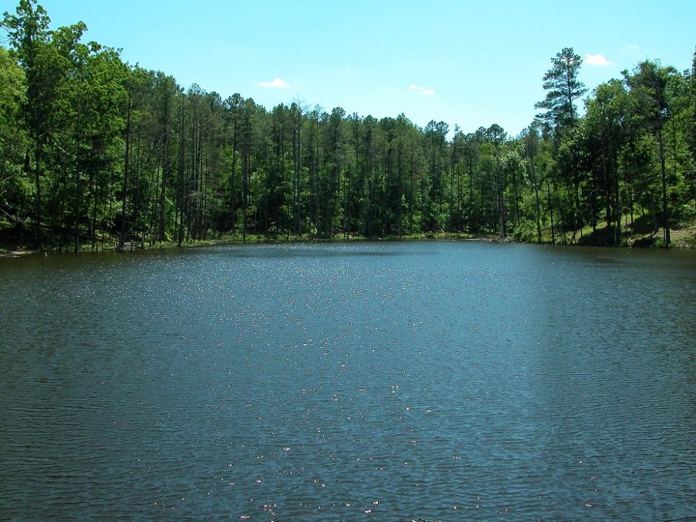Sunlight sparkles across Davies' pond on Loblolly trail.