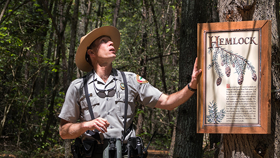 Ranger Jamie Cameron examines a hemlock tree while leading a guided hike at Lake James State Park. Photo from the NC State Parks Photo Library.