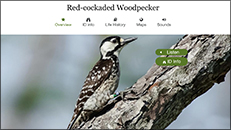 NC State Parks – Year of Fire  – All About Birds