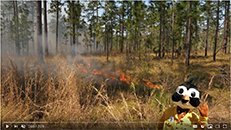 NC State Parks – Year of Fire – Burner Bob The Longleaf Alliance