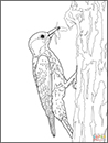 NC State Parks – Year of Fire – SuperColoring Red-Cockaded Woodpecker