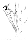 NC State Parks – Year of Fire – DrawingTutorials101 Red-Cockaded Woodpecker