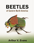 Title cover of Beetles of Eastern North America field guide