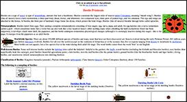 Screenshoot of Beetle Printouts page on EnchantedLearning.com