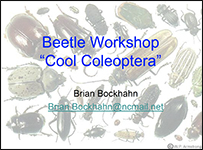 "First slide of Beetle Workshop ""Cool Coleoptera"" PowerPoint presentation"