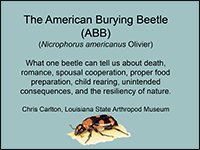Screenshot of the first page of the American Burying Beetle PowerPoint presentation