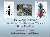 Screenshot of the first page of the Beetle Appreciation PowerPoint presentation