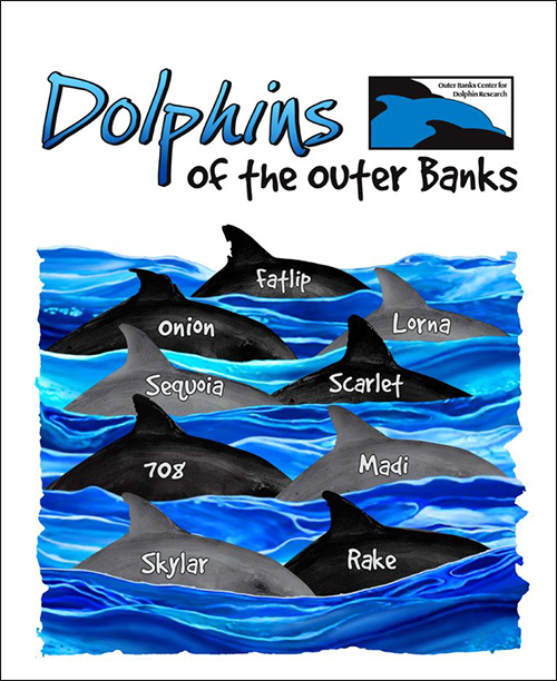 Dolphins of the Outer Banks, courtesy of the Outer Banks Center for Dolphin Research
