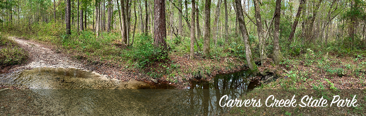 Carvers Creek State Park – Carvers Creek – Photo by J. Fields