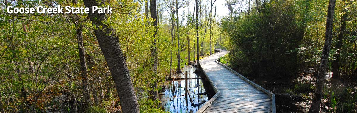 The boardwalk at Goose Creek State Park