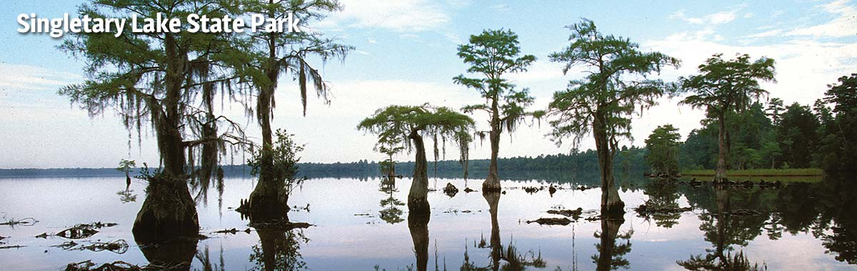 Cypress trees at Singletary Lake State Park