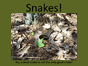 Snakes of Pitt County PowerPoint program - title screenshot