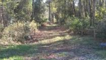 Western Boundary Trail at Dismal Swamp State Park