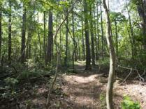 Longleaf Trail at Cliffs of the Neuse State Park