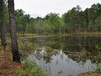 Little Pond Spur Trail at Carvers Creek State Park, Fayetteville, NC