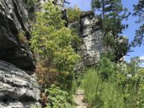 Ledge Spring Trail at Pilot Mountain State Park, Pinnacle, NC. Photo by L. Knepp.