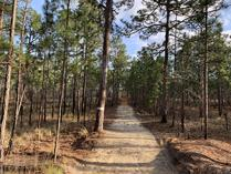 RCW Loop Trail at Carvers Creek State Park, Fayetteville, NC