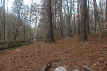 Creek along Sycamore trail.