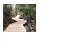 New Boardwalk at Lake Waccamaw