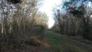 Bull Boulevard at Dismal Swamp State Park