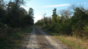 Corapeake Road at Dismal Swamp State Park