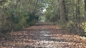 Kim Saunders Road at Dismal Swamp State Park