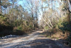 Laurel Trail at Dismal Swamp State Park