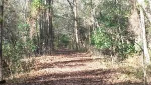 South Martha Washington Trail at Dismal Swamp State Park