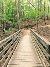 The Lake Shore Trail at Lake Norman State Park