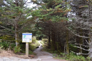 Old Mitchell trailhead at summit