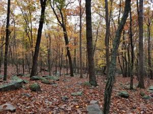 Pilot Mountain State Park Pilot Creek Trail