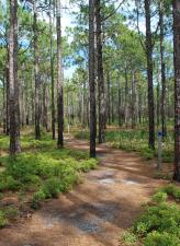 Carolina Beach's campground trail