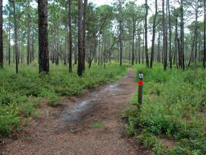 Flytrap Trail at Carolina Beach State Park