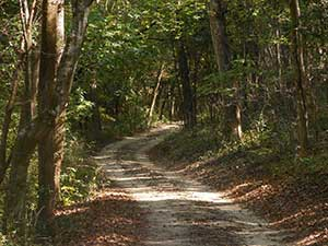 Sand Path Trail at Cliffs of the Neuse State Park