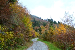 Commissary Trail in the fall