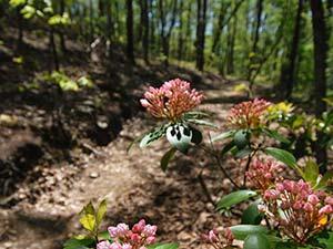 Ridgeline Trail at Crowders Mountain State Park