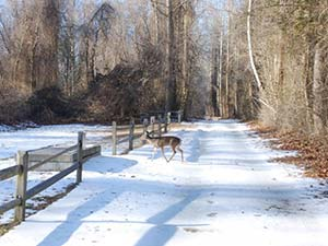 Canal Road Trail at Dismal Swamp State Park