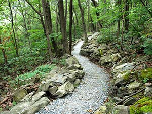 Summit Trail at Elk Knob State Park