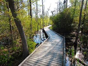 Palmetto Boardwalk trail at Goose Creek State Park