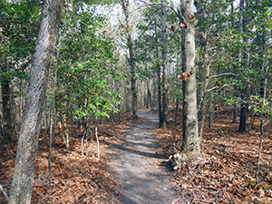 Coastal Fringe Trail at Hammocks Beach State Park. Photo by B. Swanson.