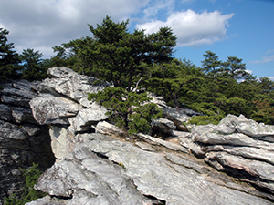 Top of Hanging Rock at Hanging Rock State Park. Photo by D. Cook.