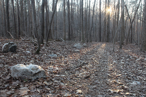Inspiration trail at William B. Umstead State Park.