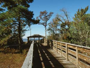 Boardwalk Trail 2 at Lake Waccamaw State Park