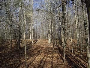 Bennets Creek Trail at Merchants Millpond State Park