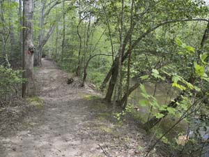 Discovery Loop Trail at Medoc Mountain State Park