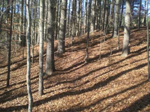 Campground Spur Trail at New River State Park