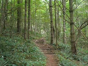 Running Cedar Trail at New River State Park