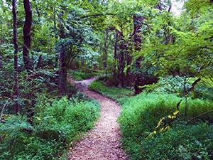Corridor Trail at Pilot Mountain State Park, Pinnacle, NC. Photo by L. Knepp.