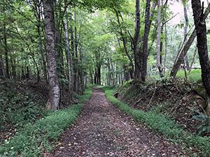Grassy Ridge Trail at Pilot Mountain State Park, Pinnacle, NC. Photo by L. Knepp.
